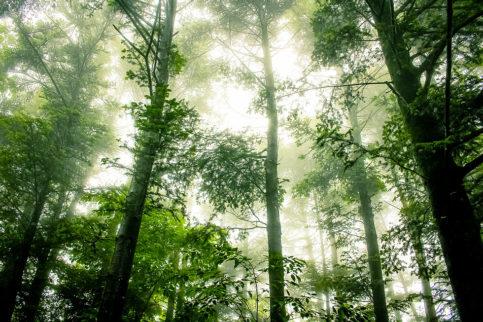 Journée Climat Biodiversité Samedi 12 Juin à 14 heures 30 – Chemin des Moulins à Chambly
